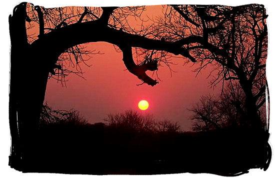 sunrise-kruge-national-park-nationalparksinsouthafrica.jpg
