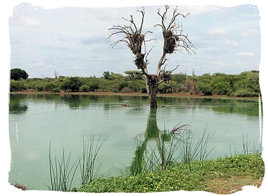 The Sunset dam, about 1km from the camp's entrance gate - Lower Sabie Rest Camp in the Kruger National Park, South Africa