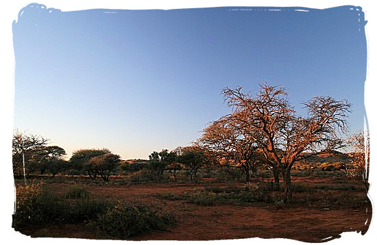Sunset in Mokala Park - Mokala National Park in South Africa, endangered African animals