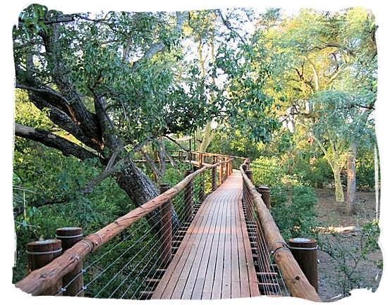 Tree-top forest walk in the National Park