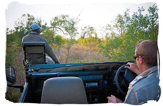 View from the inside of a game drive vehicle