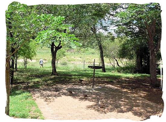 View from one of the cottages at Biyamiti bushveld camp towards the Mbiyamiti river bed