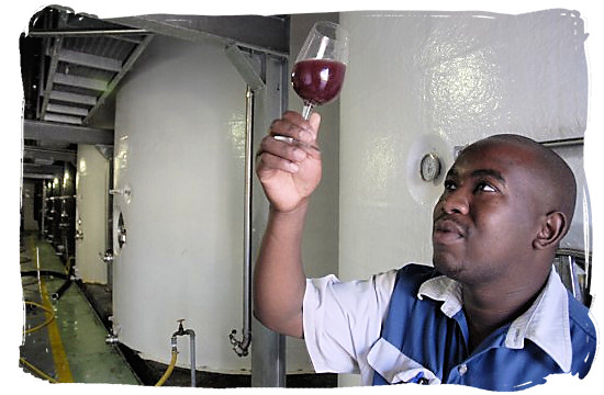 A winemaker tests a new batch of wine at the Orange River Wine Cellars in the Northern Cape province - languages of south africa, south african language