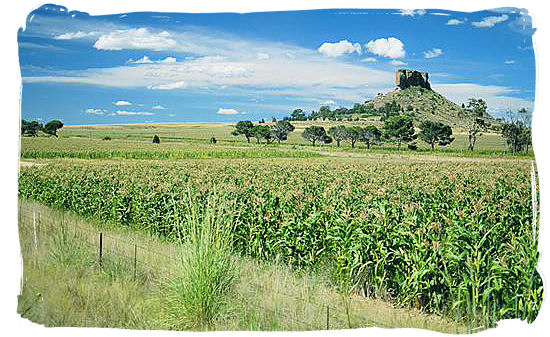 Free State is called the granary or bread basket of South Africa
