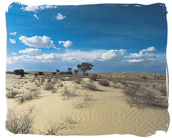 Kgalagadi Transfrontier National park in the Kalahari desert region - Cheap South Africa Car Rental, Car Hire in South Africa Info