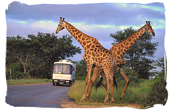 Tour coach in the Kruger National Park - Travel in South Africa, South Africa travel information