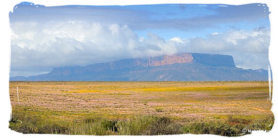 Fields upon fields of flowers in Namaqualand - Namaqua National Park South Africa, Namaqualand Flowers Spectacle