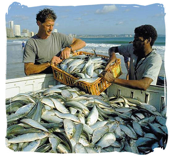 Abundance of seafood in South Africa - seafood cuisine in South Africa.