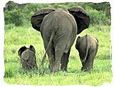 Elephants in the Addo Elephant National Park