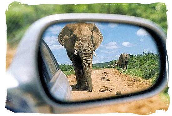 Traffic coming up from behind in the Addo Elephant National park - Addo Adventure Activities in the Addo Elephant Park