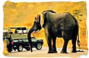 African safari game drive vehicle encountering an elephant