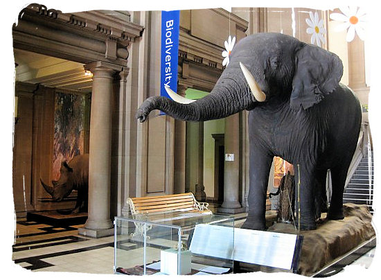 The entrance hall of the Transvaal museum in Pretoria - Gauteng museums in South Africa