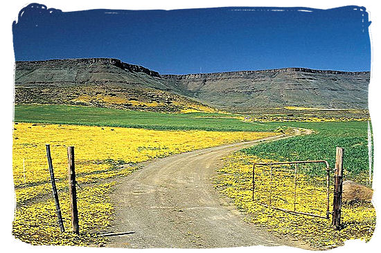 Beautiful flower landscape in Namaqualand