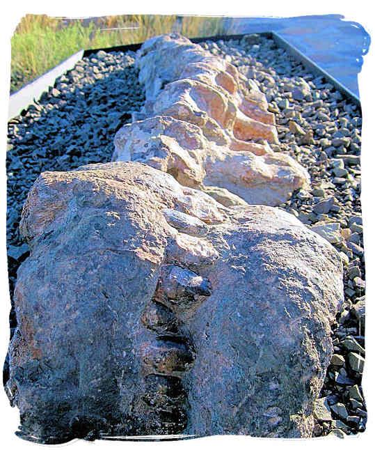 The Karoo National Park South Africa, Little Karoo, Great Karoo - Large fossil in the Karoo National Park