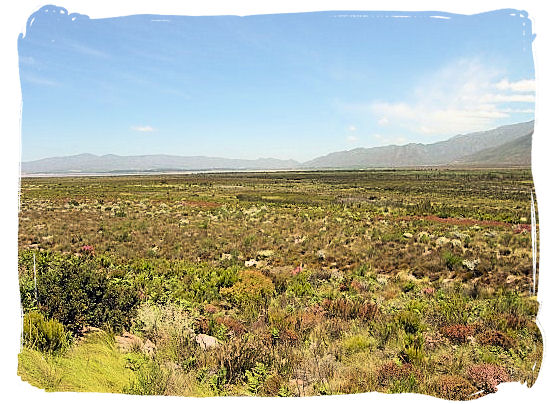 View of the extraordinary Fynbos vegetation in the Park - West Coast National Park, South Africa National Parks
