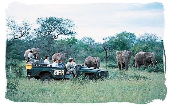 Elephant encounter on a game drive