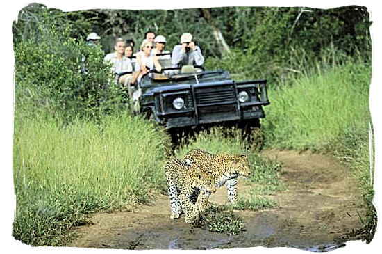 Game drive and Leopard encounter - Bateleur Camp, Place of the Bateleur Eagle, Kruger National Park