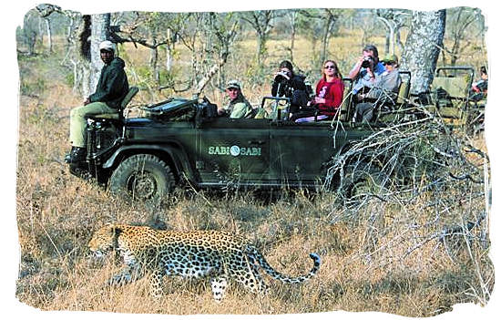 Leopard encounter during game drive