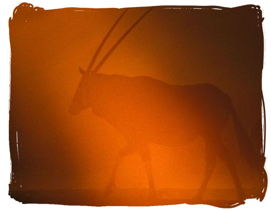 Silhouette of a Gemsbok - Kalahari Camp, Kgalagadi Transfrontier Park, South Africa