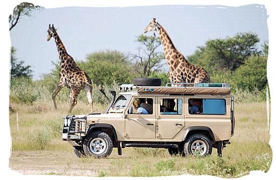 Giraffe encounter on a self-drive safari in Botswana