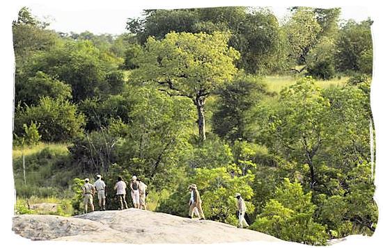 Guided bush walk - Tsendze camp