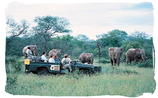 Guided game drive - Letaba main rest camp, Kruger National Park, South Africa