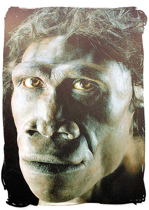 Artist's impression of Homo Erectus, one of humankind's earliest ancestors on view at the Sterkfontein Caves exhibition - City of Johannesburg South Africa Attractions, the Top 15