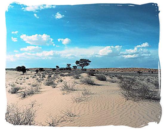 Kalahari landscape - Kalahari Camp, Kgalagadi Transfrontier Park, South Africa