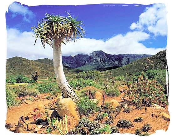 Karoo landscape - Camdeboo National Park (previously Karoo Nature Reserve