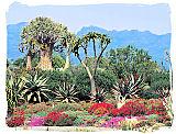Desert flora landscape in the Karoo National Park