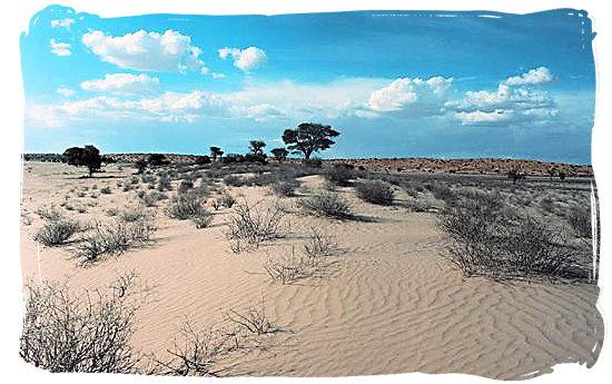 The arid wilderness of the Kalahari desert - Kgalagadi Transfrontier Park