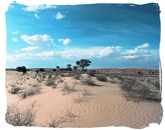 The semi-arid habitat of the Kgalagadi Transfrontier Park in the southern Kalahari desert