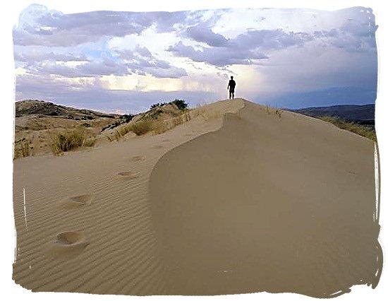 Sand dunes in the Kalahari - Kgalagadi Transfrontier Park in the Kalahari, South Africa