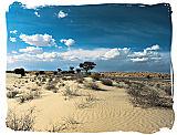 Kalahari desert landscape in the Kgalagadi National Park