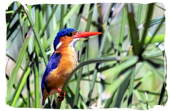 Kingfisher - Skukuza Safari, Travel and Accommodation