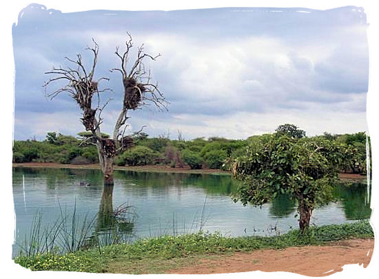 Landscape in the Kruger National Park - Tsendze Camping site, Kruger National Park, South Africa
