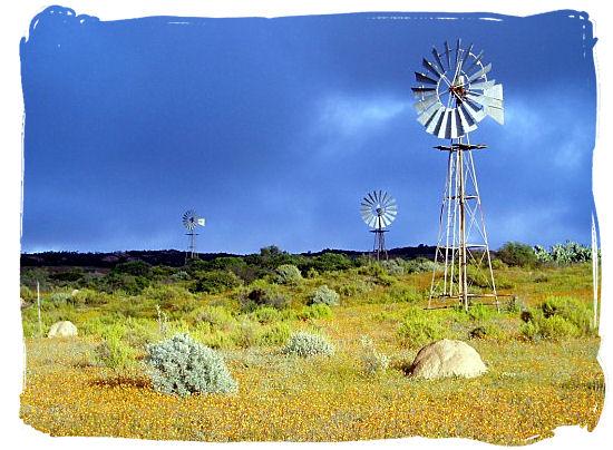 Windpumps in the Namaqualand landscape - Namaqualand National Park South Africa, Namaqualand Flowers Spectacle