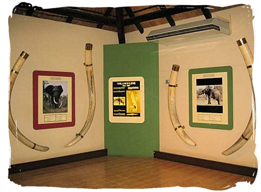 Elephant Hall of fame at the Letaba main rest camp, Kruger National Park, South Africa