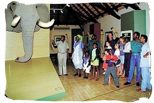 The Elephant museum at Letaba rest camp - Kruger National Park accommodation