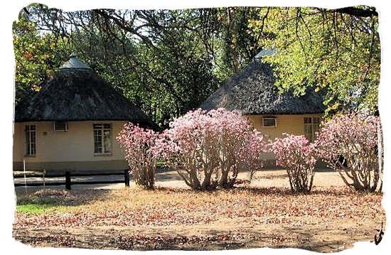 Riverine vegetation adorning the Letaba main rest camp, Kruger National Park, South Africa