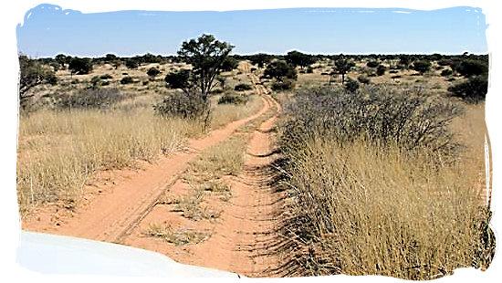 Typical Kgalagadi 4x4 wilderness track - Kgalagadi Transfrontier Park in the Kalahari