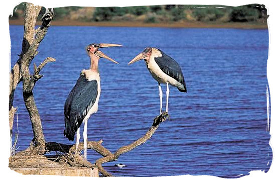Maraboe conversation - Lower Sabie Rest Camp in the Kruger National Park, South Africa
