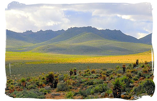 Namaqua landscape carpeted with flowers - Namaqualand National Park and the Namaqua flowers spectacle