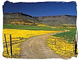 Wild flowers spectacle in the Namaqua National Park