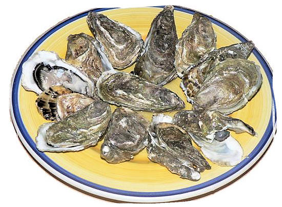 Oysters - South African food adventure, South Africa food