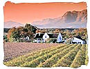 Winelands in the Paarl