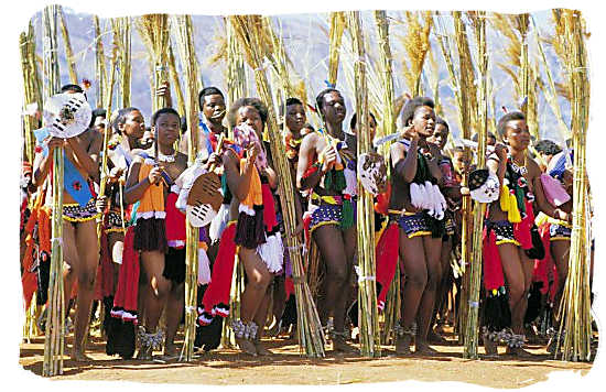 The traditional Reed Dance performed every year by Swazi maidens before the King of Swaziland - South African dance