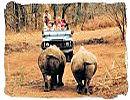 Safari wildlife encounter