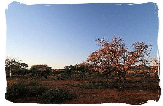 Sunset in Mokala Park - Mokala National Park in South Africa, endangered African animals