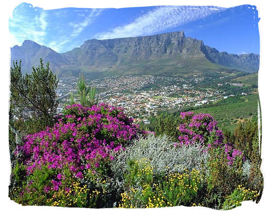 View of Table Mountain from Signal Hill with the typical Cape